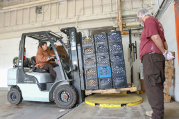 Inmate operating fork lift to move loaded crates of juice while another inmate supervises