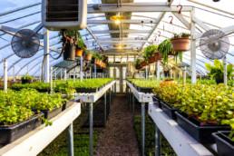 UCI nursery greenhouse with growing plants