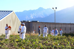 Inmates working at the pumpkin fields in the UCI nursery